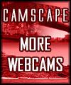 More web cams